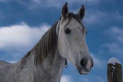 Hästlantgård, trevliga rena häststall Royaltyfria Bilder