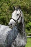 Hästlantgård, trevliga rena häststall Arkivbild