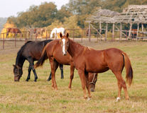 Hästlantgårdplats Arkivbilder