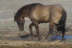 Hästlek Arkivfoto