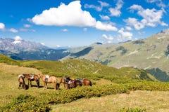 hästliggandeberg Royaltyfri Foto