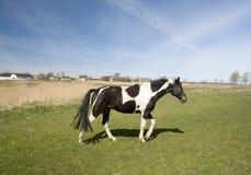 hästmålarfärg Arkivfoto