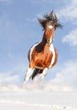 hästmålarfärg Fotografering för Bildbyråer