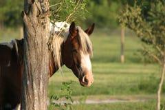 hästmålarfärg royaltyfri fotografi
