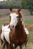 hästmålarfärg Arkivbild