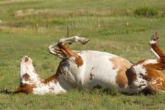 hästmålarfärgrullning Royaltyfri Fotografi