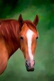 Hästmålning Fotografering för Bildbyråer