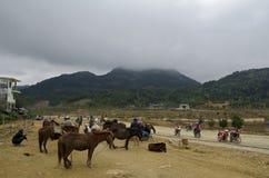 Hästmarknad i Vietnam Arkivfoto