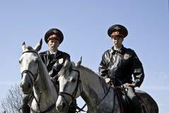 hästmilis Arkivbild