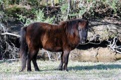 hästminiature Royaltyfri Fotografi
