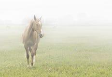 hästmist Arkivfoton
