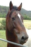 Hästnärbild Arkivbild