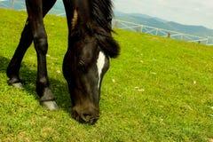 Hästnärbild på överkanten av berget Arkivbild