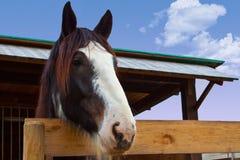 hästnäsa Arkivbild