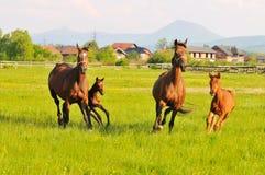 Hästnatur Arkivfoto