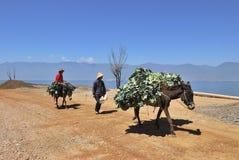hästpacke arkivfoton