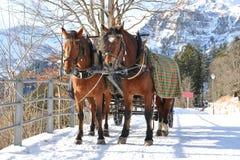 hästpar Arkivfoton