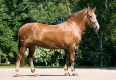 hästpark Royaltyfri Foto