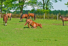 Hästpilbåge Royaltyfria Foton