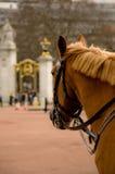 hästpolis Royaltyfria Foton
