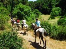 hästpromenad Royaltyfri Fotografi