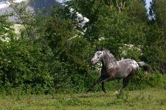 häströrelse Arkivbilder