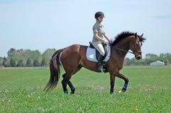 hästridning Fotografering för Bildbyråer
