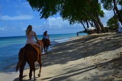 Hästridning i Barbados Arkivfoto