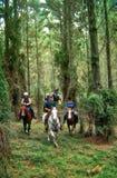 Hästridning i buske royaltyfria bilder