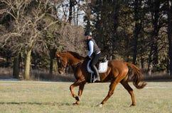 Hästridning i fält Royaltyfria Foton