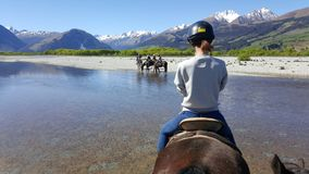 Hästridning i Glenorchy, Nya Zeeland royaltyfri foto