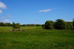 Hästridning i killarney Irland arkivbilder