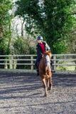 Hästridning på paddocken Royaltyfri Fotografi