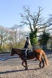 Hästridning på paddocken Royaltyfria Bilder