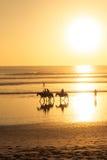 Hästridning på stranden på solnedgången Fotografering för Bildbyråer