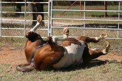 hästrullning arkivbild