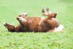 Hästrullning på baksida Arkivbild