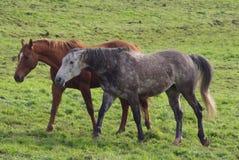 hästrunning Royaltyfri Bild