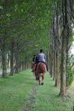 hästryggridning Arkivfoton