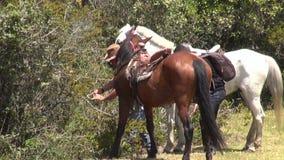 Hästryggridning, hästar, djur stock video