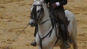 Hästryggridning, hästar, djur arkivfilmer