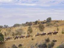 Hästryggridning i den Hollywood Hills slingan royaltyfri fotografi