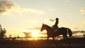 Hästryttare på solnedgången Ung banhoppning för häst för ridning för jockeyindiankrigareflicka stock video