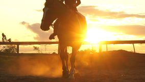 Hästryttare på solnedgången Ung banhoppning för häst för ridning för jockeyindiankrigareflicka arkivfilmer