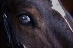 Hästs öga Fotografering för Bildbyråer