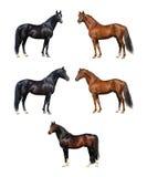Hästsamling - som isoleras på vit Arkivbilder