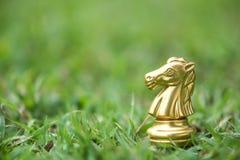 Hästschackstycken på sparat gräs royaltyfri fotografi