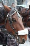 Hästsele i Wien, Österrike Arkivfoto