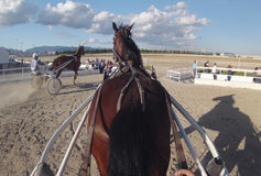 Hästselelopp 052 Arkivbilder
