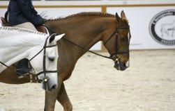 hästshow 2007 Royaltyfri Fotografi